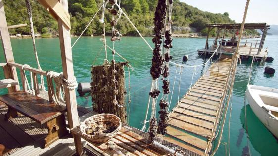 Culture, food and wine in Dalmatia